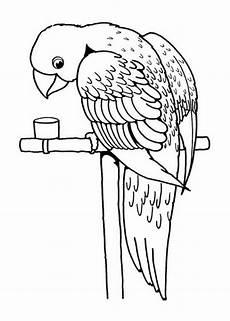 ausmalbilder papagei kostenlos malvorlagen zum