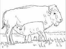 American Bison with Calve coloring page   SuperColoring.com