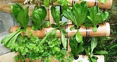 giardino verticale fai da te giardino verticale fai da te stili di giardini