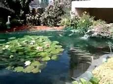 bassin a carpe koi le ko 239 ou carpe ko 239 le bassin de jardin de popeye du 68