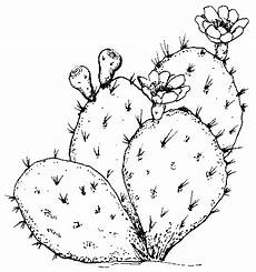 Cactus Plant Coloring Pages Cactus Coloring Pages And Printables