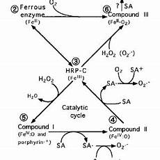 pdf spectroscopic evidence that salicylic acid converts a temporally inactivated form of
