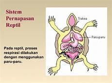 Bab 7 Sistem Pernafasan