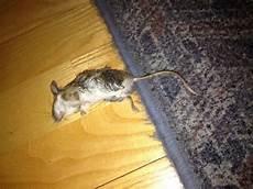 Maus Im Haus Fangen - fundst 252 ck giftigeblonde