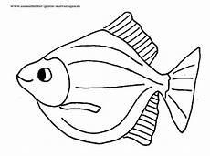 ausmalbilder fische gratis vorlage malen