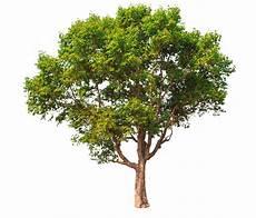 baumsparvertrag forestfinance