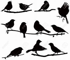 birds sitting on a branch line search