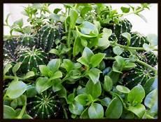 el paso flora a succulent paradise apple plant