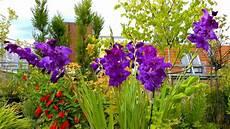 gladiole gartennatur