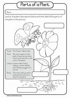kindergarten science learning outcomes thematic unit plan