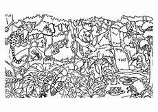 ausmalbilder jungle tiere the animals of the jungle forest