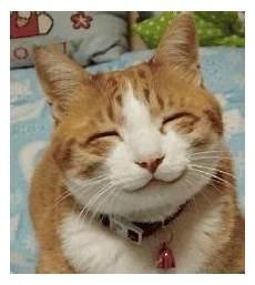 Kumpulan Gambar Hewan Lucu Bikin Ketawa Gambargambar Co