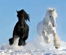 Schöne Pferde Bilder - 13 beautiful horses in the nature interior design