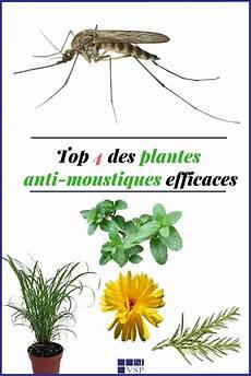 top 4 des plantes anti moustiques efficaces anti