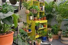 discover your with indoor plants and lifestyle home garden this winter
