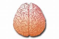Mengenal Bagian Bagian Otak Dan Fungsinya