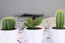 Kaktus Im Glas Deko Diy Pinselleicht Einfaches