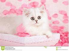 pink kitten wallpaper cat images 78 best images about cats in pink on cats