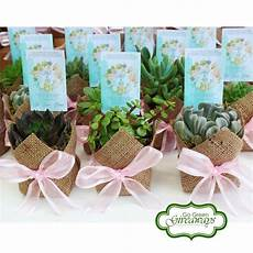 succulents birthday giveaways succulents philippine weddings events ph succulents