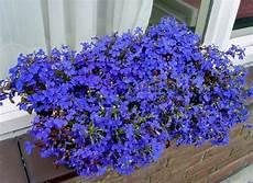 fiori a cascata fiori da balcone