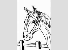 fun   Paard web.jouwweb.nl