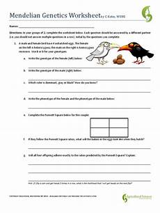 mendel genetics worksheet with answers mendelian genetics worksheet