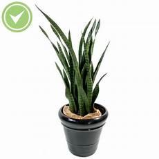 Plante Interieur Pas Cher Plante Verte D Int 233 Rieur Pas Cher Maison Et Fleurs