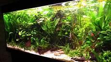 larscarving aquarium schritt f 252 r schritt neu einrichten