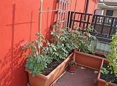 paprika auf dem balkon pflanzen 187 wann wie