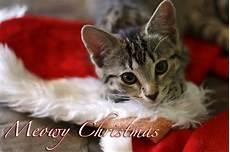funny christmas cat photos chronicles