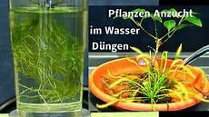 pflanzen im wasser vermehren und heran ziehen