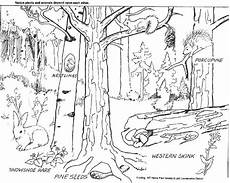 coloring pages ecosystem animals 16973 printable deciduous forest pictures second ponderosa pine forest master sheet b tell