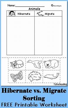 free sorting worksheets for preschoolers 7870 the 25 best hibernating animals ideas on animals that hibernate kindergarten