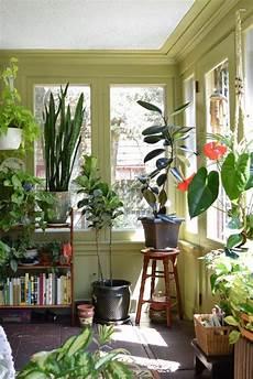 pflanzen für wohnzimmer inspirierende dekoideen kleiner innen gartenbereich