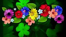 Flower Wallpaper For Windows by Colorful Flower Hd Wallpapers Wallpaper Cave