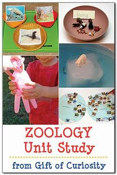 animal behavior worksheets high school 13807 unit study zoology zoology science activities for learning activities