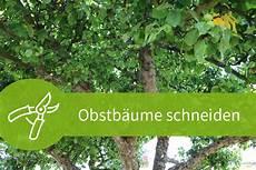 Obstbäume Pflanzen Wann - obstb 228 ume schneiden wann ist der beste zeitpunkt