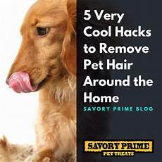 5 very cool hacks to remove pet hair around the home savory prime pet treats