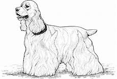 Ausmalbilder Hunde Cocker Spaniel Coloring Pages By Yuckles