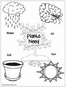 needs of plants worksheets kindergarten 13579 image result for what plants need to grow worksheet parts of a plant plants kindergarten