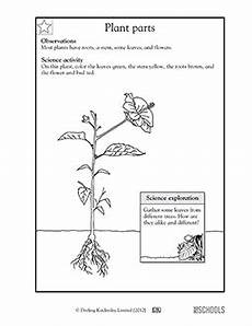 science worksheets for 2nd grade plants 1st grade 2nd grade kindergarten science worksheets