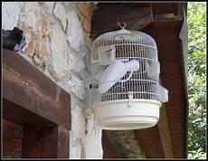 pappagallo in gabbia barzellette net foto pappagallo molto particolare in