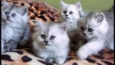 Gambar Kucing 2 Dimensi