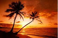 tropical beach sunset prints at allposters com