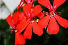 rote blumen foto bild pflanzen pilze flechten