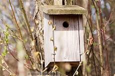 vogelhaus bauen 187 bauanleitung vogelhaus 187 pdf kribbelbunt
