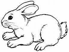 tale page rabbits coloring pages realistic