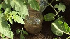 pflanzen bewässern mit plastikflasche plastikflasche als bew 228 sserungshilfe frag mutti