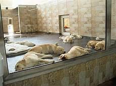 zoo zajac hunde peta greift erneut zoo zajac an gegen radikalen