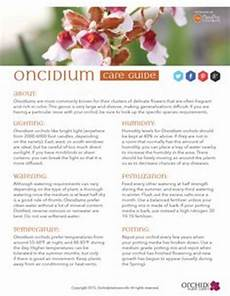 easyorchidgrowing com easy orchid growing care tips and videos found here by the orchid
